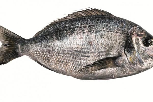 fish-t1CFFA976-AAB1-5599-0BD3-C0B0BB891F3C.jpg